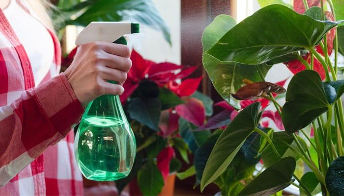 Houseplants: The Health Benefits
